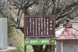 S20170326_001_matubakake