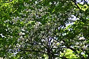 S20170604_045_miune_hirakura
